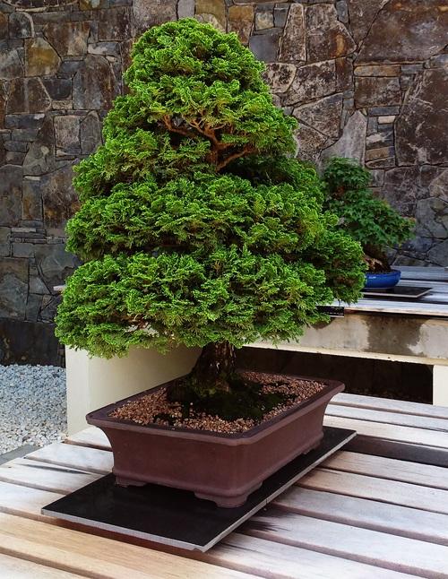 Various good looking bonsai Stock Photo 04