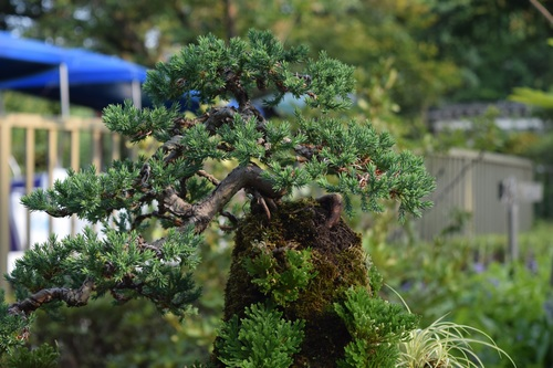 Various good looking bonsai Stock Photo 05
