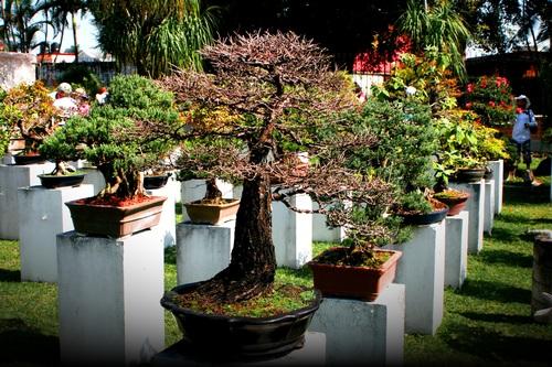 Various good looking bonsai Stock Photo 06
