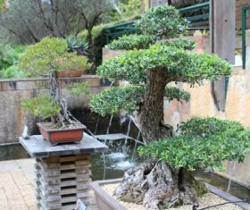 Various good looking bonsai Stock Photo 07