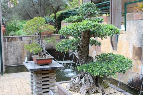 Various good looking bonsai Stock Photo 07