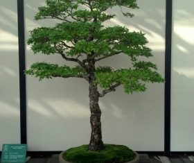 Various good looking bonsai Stock Photo 09