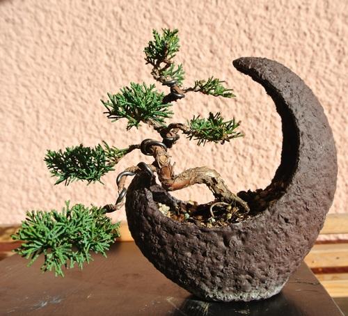 Various good looking bonsai Stock Photo 10