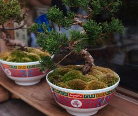 Various good looking bonsai Stock Photo 11