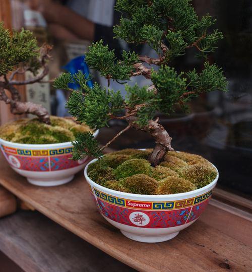 Various good looking bonsai Stock Photo 11