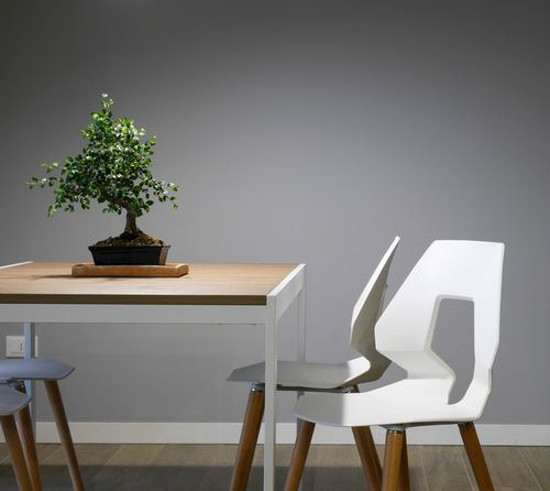 Various good looking bonsai Stock Photo 12