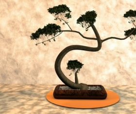 Various good looking bonsai Stock Photo 13