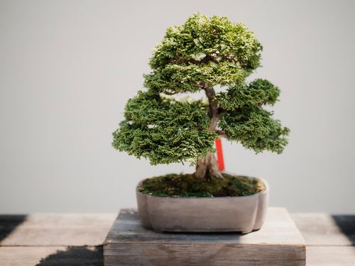 Various good looking bonsai Stock Photo 14