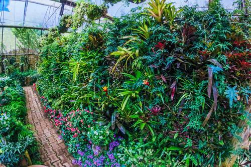 greenhouse Stock Photo 03