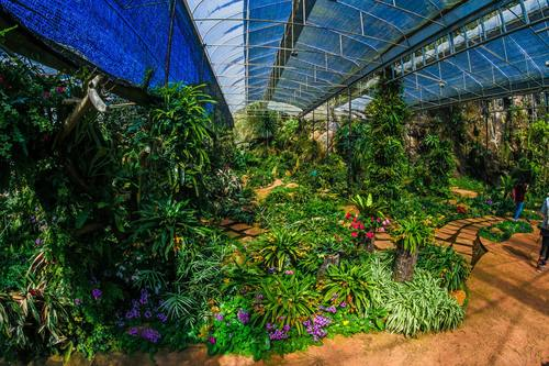 greenhouse Stock Photo 04