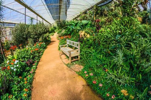 greenhouse Stock Photo 05