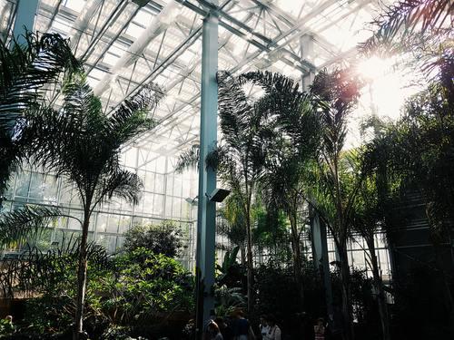 greenhouse Stock Photo 09