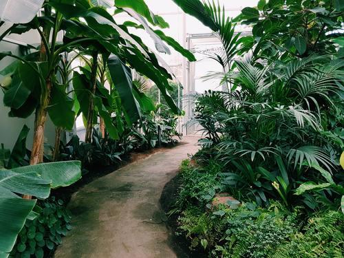 greenhouse Stock Photo 10