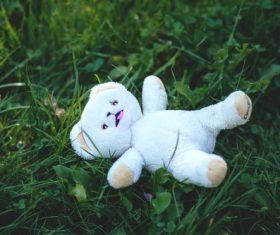 plush teddy bear Stock Photo 05