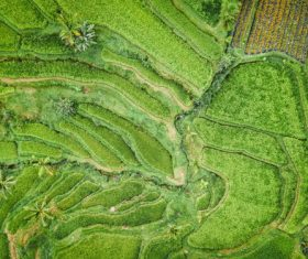 Aerial photography green rural scenery Stock Photo