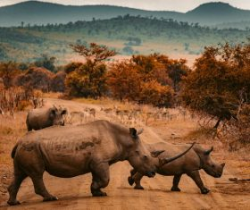 African rhino Stock Photo