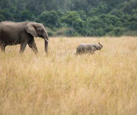 Baby elephant and mother elephant Stock Photo