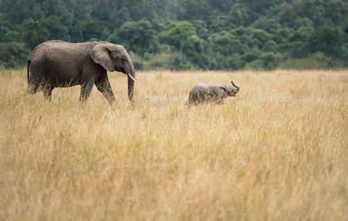Baby elephant and mother elephant Stock Photo