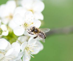 Bees collecting nectar Stock Photo 01