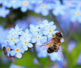 Bees collecting nectar Stock Photo 04