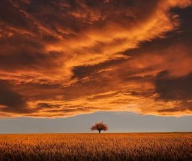 Big tree scenery under the dark clouds Stock Photo
