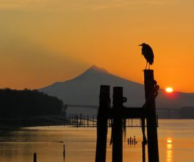 Bird standing on wooden stake at sunset Stock Photo