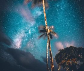Bright coconut tree under the stars Stock Photo
