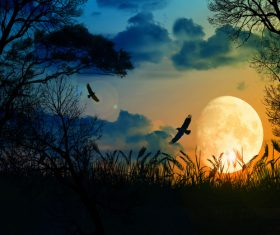 Bright moon and crows natural scenery Stock Photo