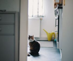 Cat sitting in the kitchen Stock Photo