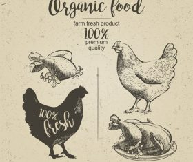 Chicken meat poster vintage design vector