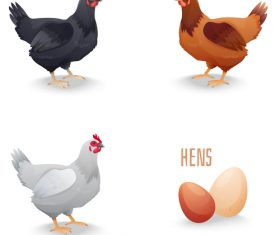 Chicken with egg illustration vectors