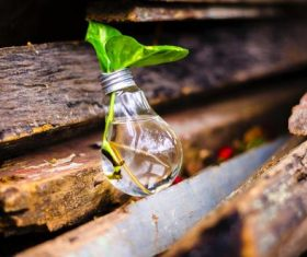 Close-up photography of green plants growing in light bulb Stock Photo