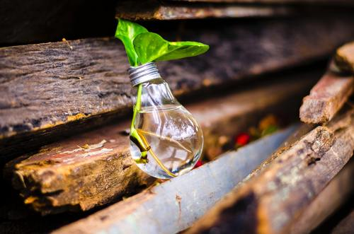 Close up photography of green plants growing in light bulb Stock Photo