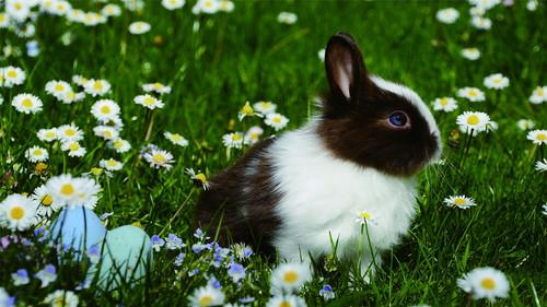 Cute little bunny Stock Photo 03
