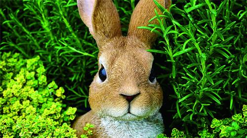 Cute little bunny Stock Photo 05