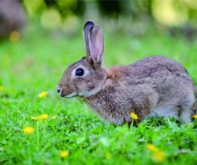 Cute little bunny Stock Photo 06