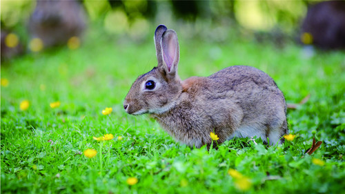 Cute little bunny Stock Photo 06