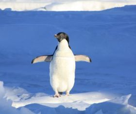 Cute little penguin standing on the ice Stock Photo