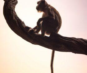Cute wild macaque Stock Photo