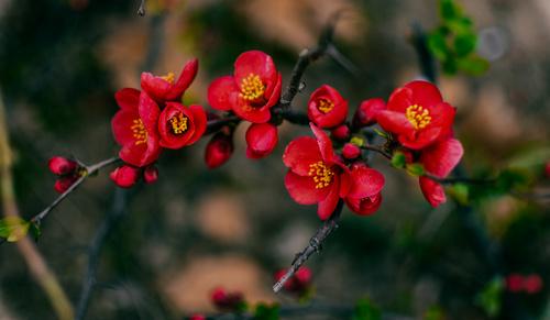Delicate and blooming begonia pedunculata Stock Photo 04
