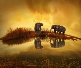 Elephants near pond at sunset Stock Photo