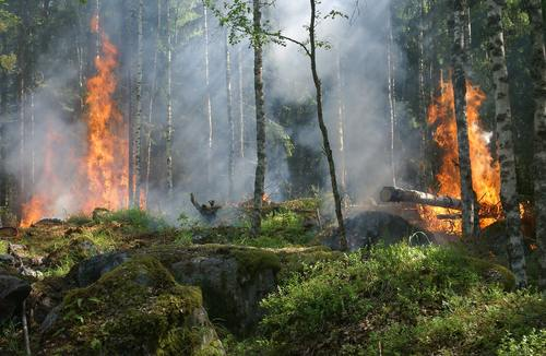 Forest fires Stock Photo