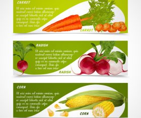Fresh vegetable banners vectors material 1