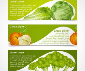 Fresh vegetable banners vectors material 3