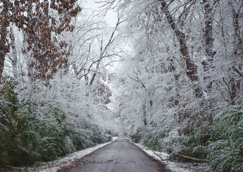 Frosted trees on both sides of the road Stock Photo