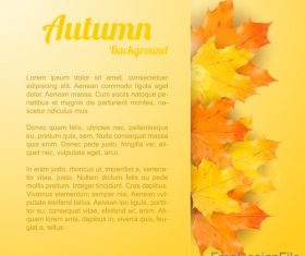 Golden autumn background with maple leaves vectors 01