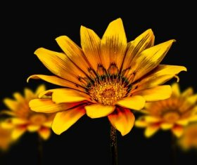 Golden flower close shot closeup Stock Photo