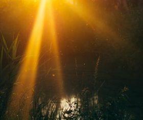 Grass close-up under golden light Stock Photo