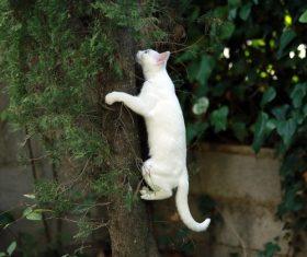 Kitten climbing tree Stock Photo