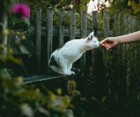 Kitten sniffing human hand Stock Photo
